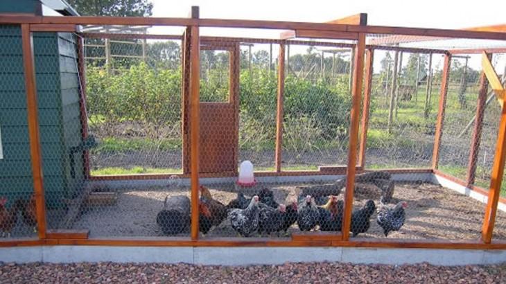 Omheining Kippenren